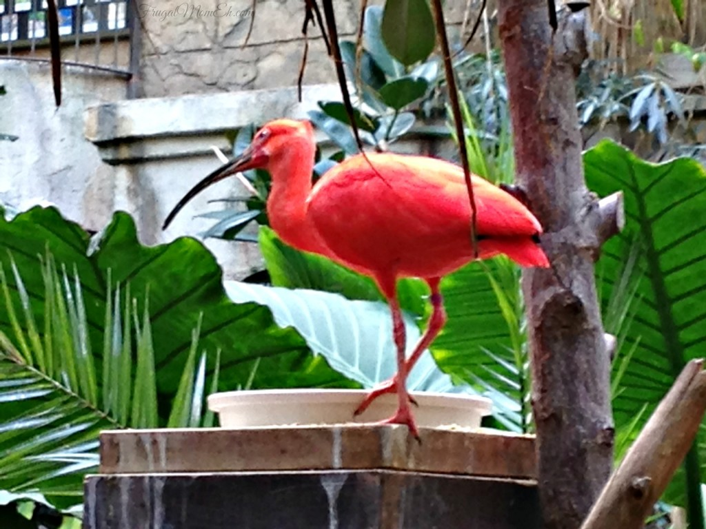 A Tropical Adventure at Bird Kingdom in Niagara Falls