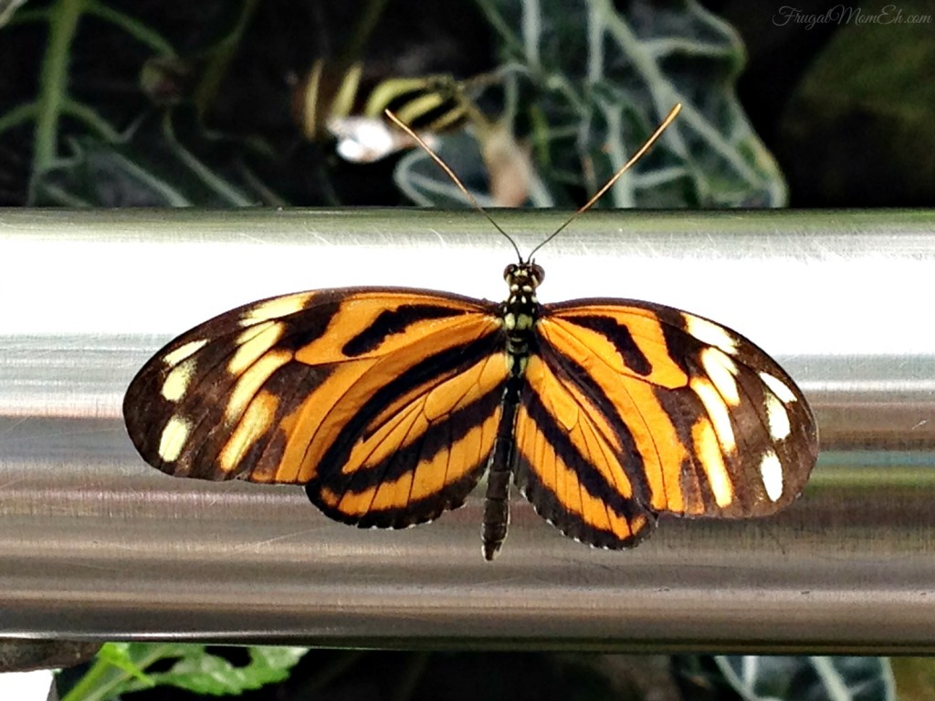 The Niagara Parks Butterfly Conservatory