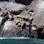 Best Places to Spot Wild Animals in Alaska