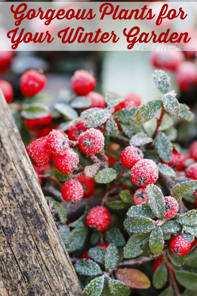 Gorgeous Plants for Your Winter Garden