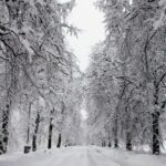 How to Prepare for Winter Storms