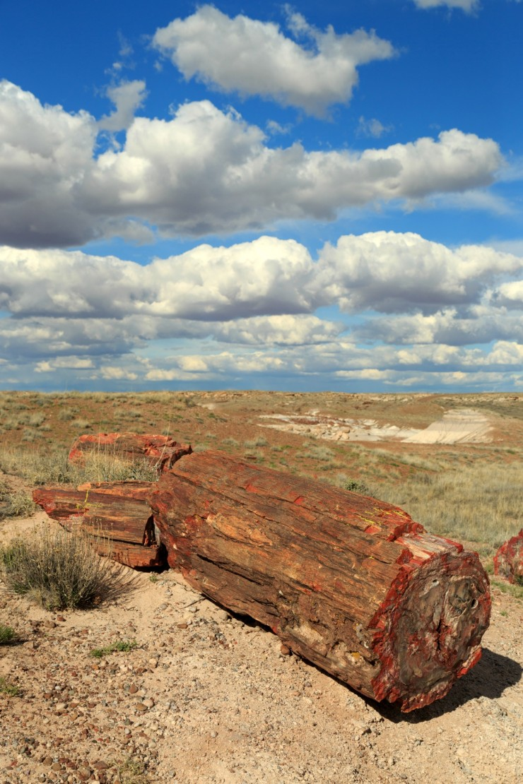 Petrified wood found in Petrified Forest National Park, Arizona