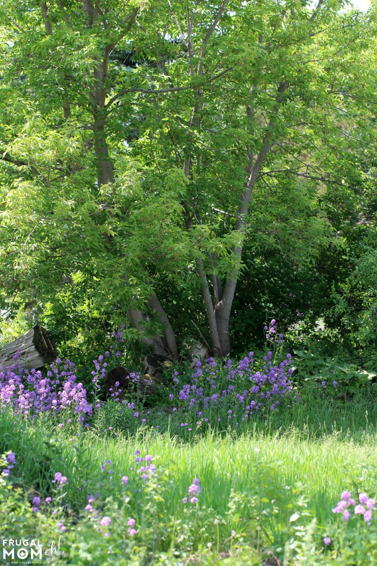 Prince Edward County Wildflowers - - 7 Must-See Attractions in Prince Edward County, Ontario - One of Canada's Top Tourist Destinations!