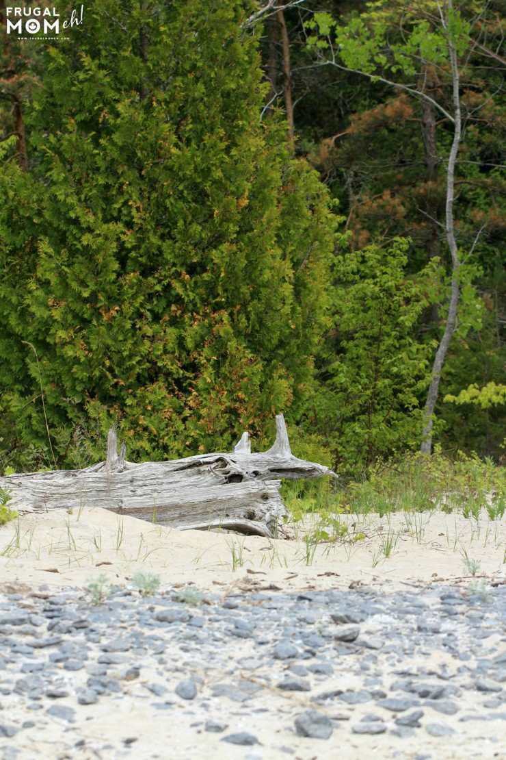 Where the forest meets Sandbanks  Beach -  7 Must-See Attractions in Prince Edward County, Ontario - One of Canada's Top Tourist Destinations!