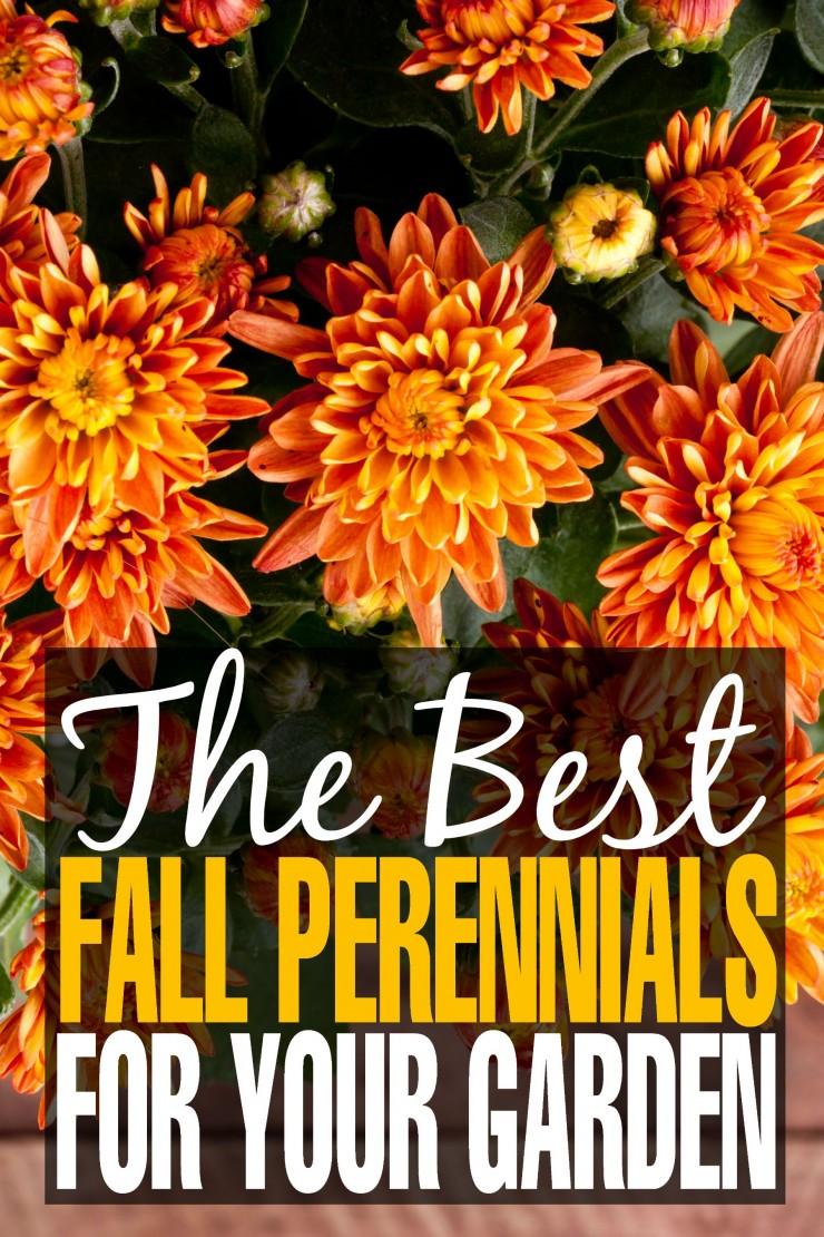 The Best Fall Perennials for your Garden & Gardening Tips for Autumn