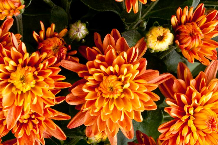 The Best Fall Perennials for your Garden