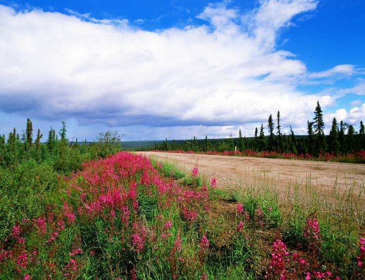The Dempster Highway, Yukon and Northwest Territories.