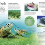 Smithsonian Ocean a children's visual encyclopedia