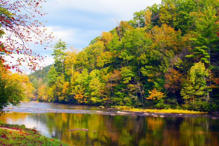 Tellico River in Cherokee National Forest