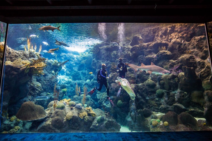 The Florida Aquarium - 7 Must-See Attractions in Florida
