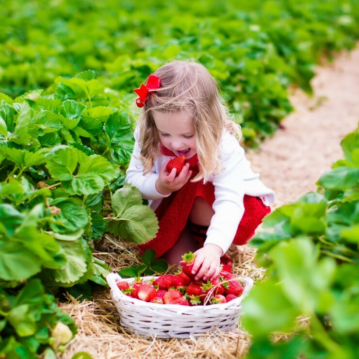 Top Tips for a Successful Trip to a Pick Your Own Farm